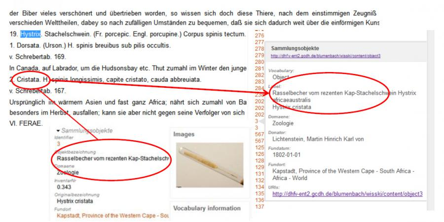 Abb. 6: Darstellung der Objekte im Kontext                                 der TEI Edition der Werke Blumenbachs. Foto des Rasselbechers: GZG                                 Museum / G. Hundertmark.